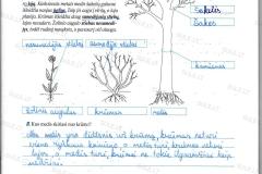 Biologija-6-klasei-2-dalis-1-puslapis